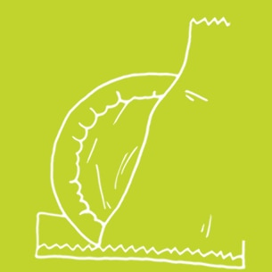 Illustration of a condom in a wrapper on a green background - Libresse