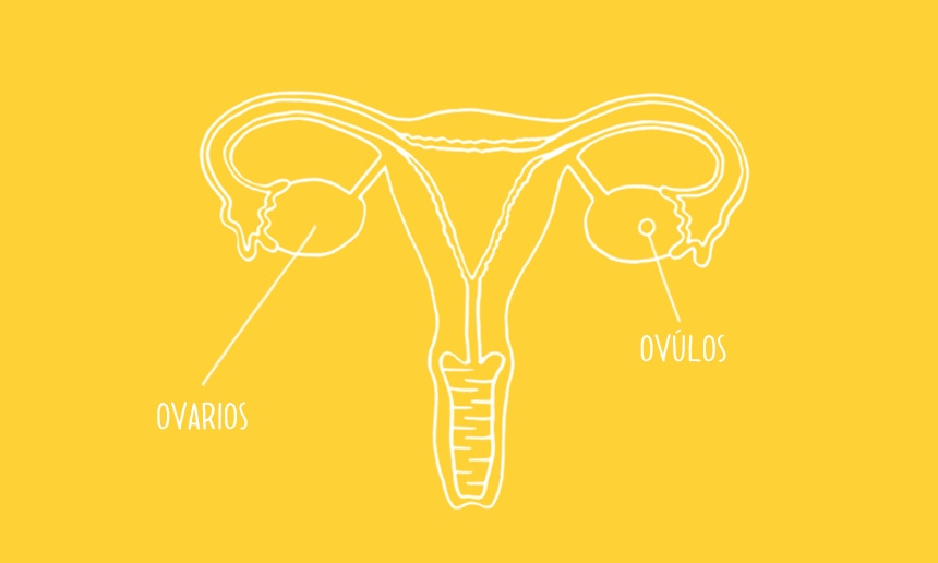 860x516_menstrual-cycle-se-02_CAM.png
