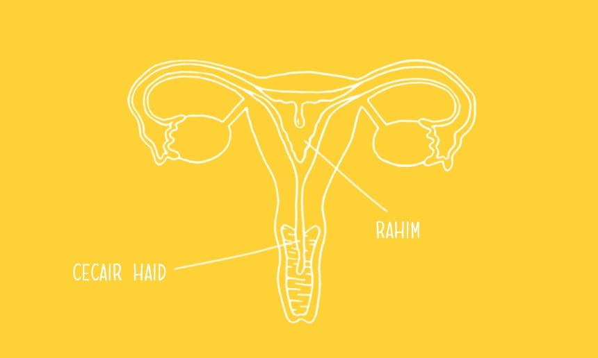 860x516_menstrual-cycle-se-01_MY.png