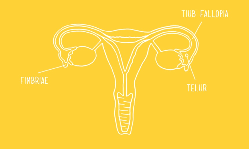 860x516_menstrual-cycle-se-03_MY.png